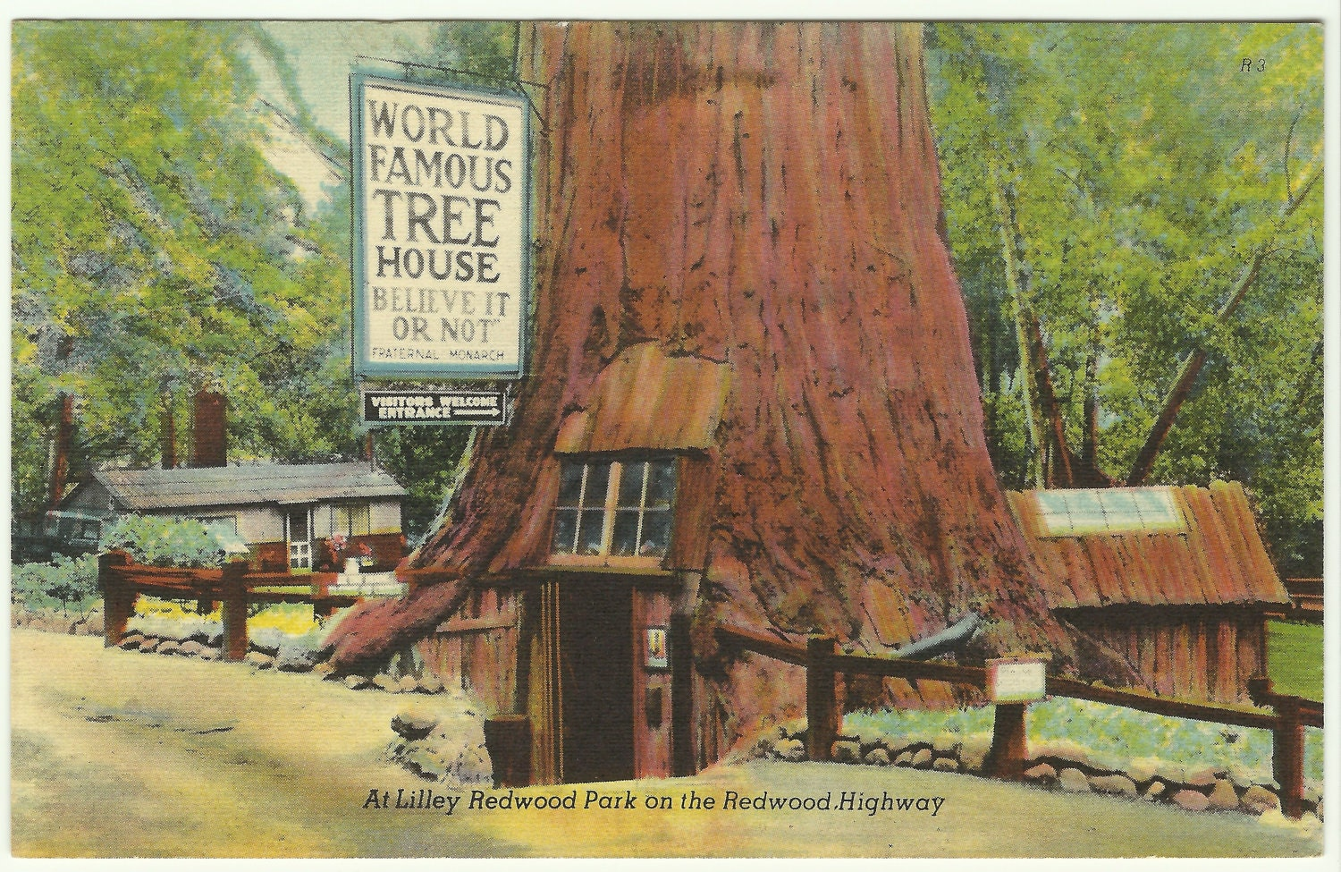 Vintage Linen Postcard World Famous Tree By
