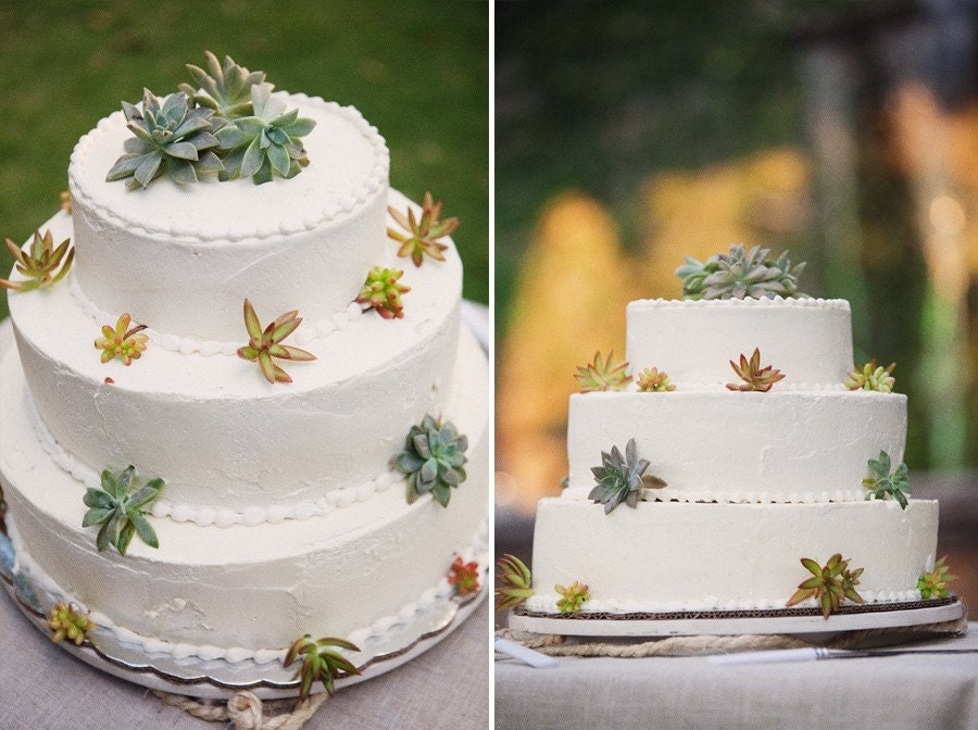 A COLLECTION OF 24 SUCCULENTS, PERFECT PARTY FAVORS, CAKE TOPPERS, BOUQUETS