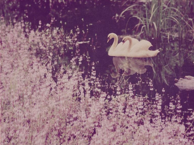 Swan Lake 8x10 - ALPhotography