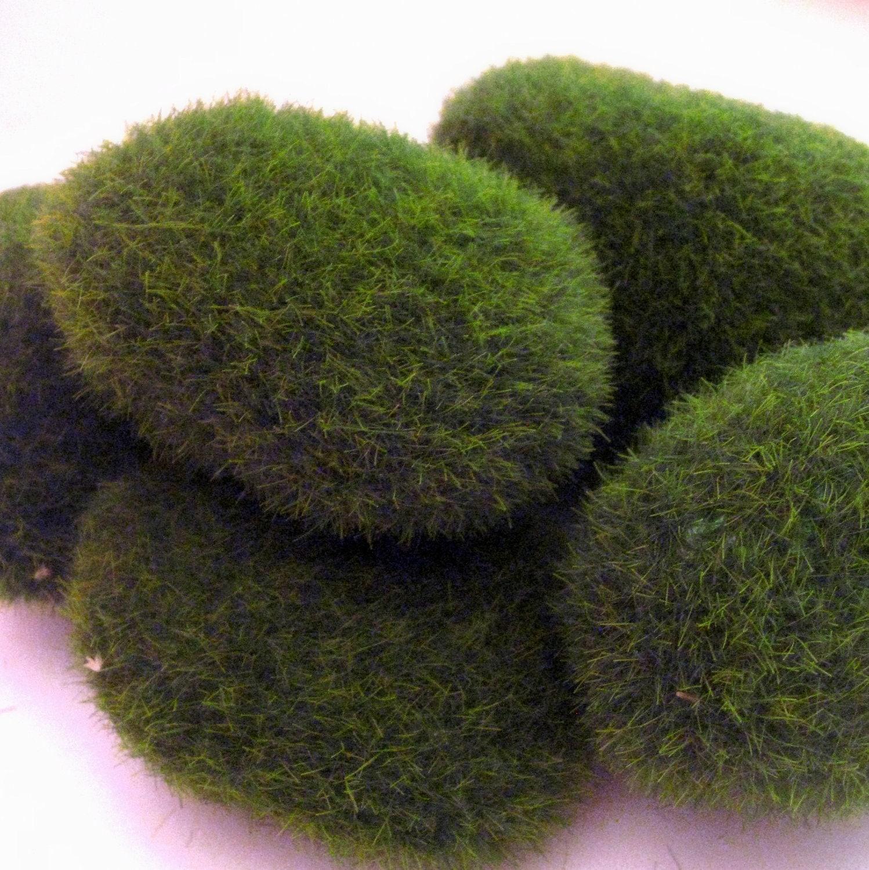 Green Fake Terrarium Moss Rocks for Miniature Garden and Floral Craft - Oceansupplies