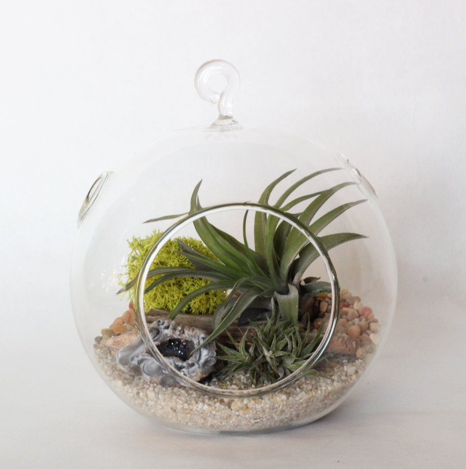 Medium Hanging Glass Globe with Flat Base - Great for DIY Terrariums - BirdAndFeatherCo