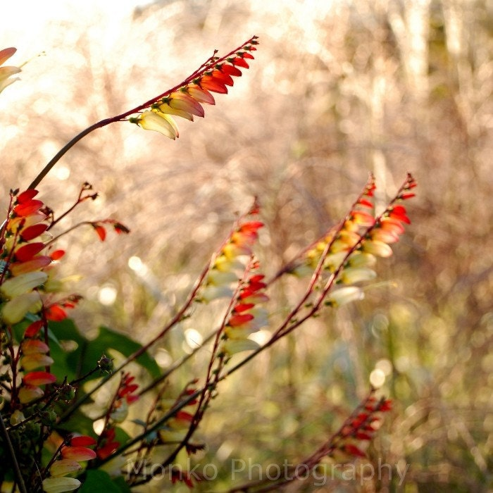 grasses in the autumn sunlight fine art photography