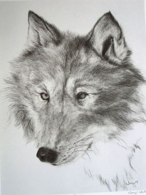 black and white wolf drawings. Black and White Drawing