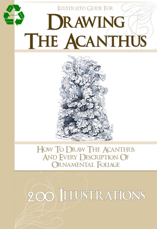 how to draw acanthus pdf