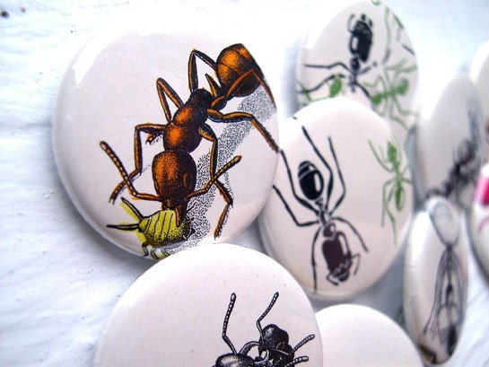 ANTS and an Aphid . 1.25 Inch Buttons. Set of 9.
