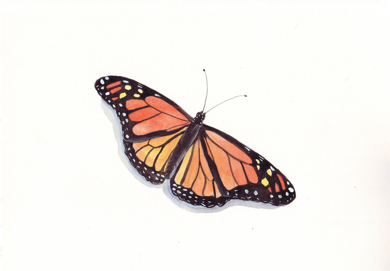 Butterfly ORIGINAL watercolor painting- (Splodgepodge)