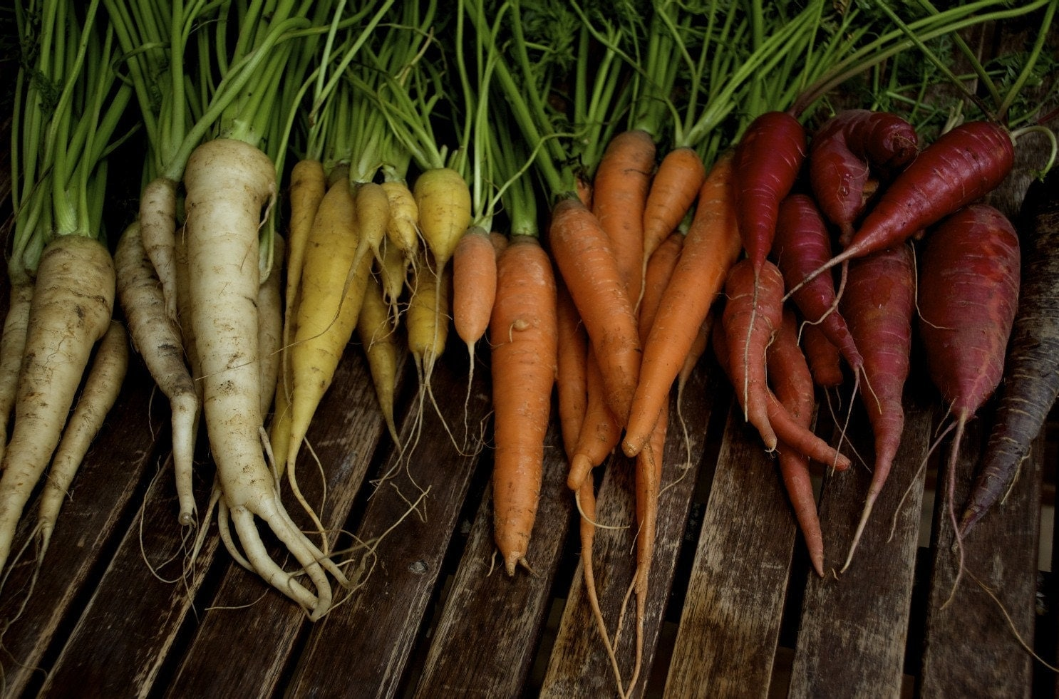 Colourful Carrot Mix Organic Heirloom Seeds - cubits
