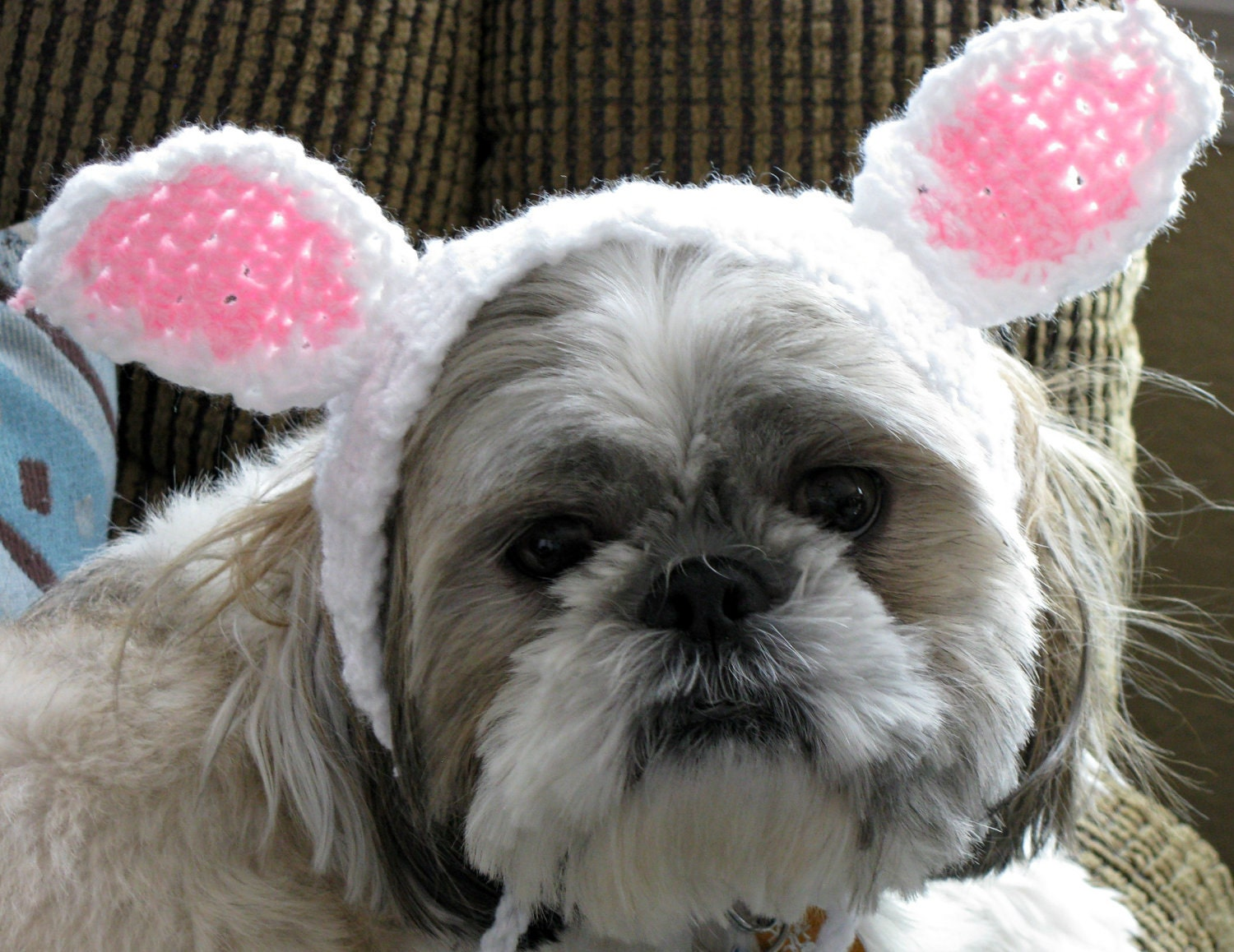 Dog Hat with Bunny Ears - littlecherylcrochet