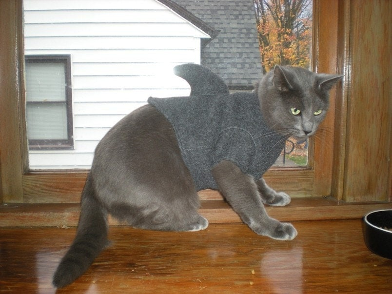 Kitten Shark Cat Sweater
