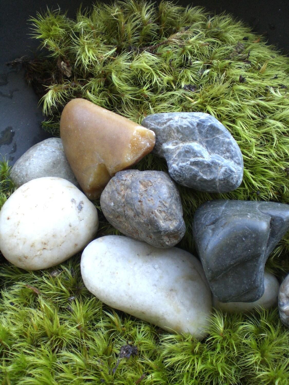 Popular items for terrarium rocks on etsy for Smooth landscaping rocks