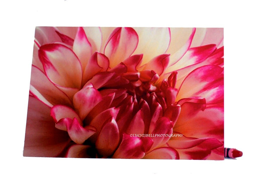 Dahlia Flower-Blank Photography Note Cards, Keepsake Cards, Pink Flower Art,  Beautiful Blank Greeting Cards - ONEMAGICALMOMENT