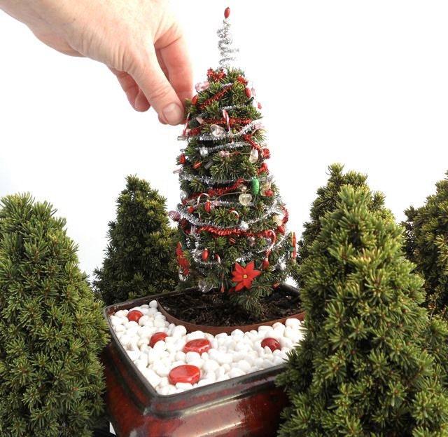 Best 28 Miniature Live Christmas Tree Christmas Trees