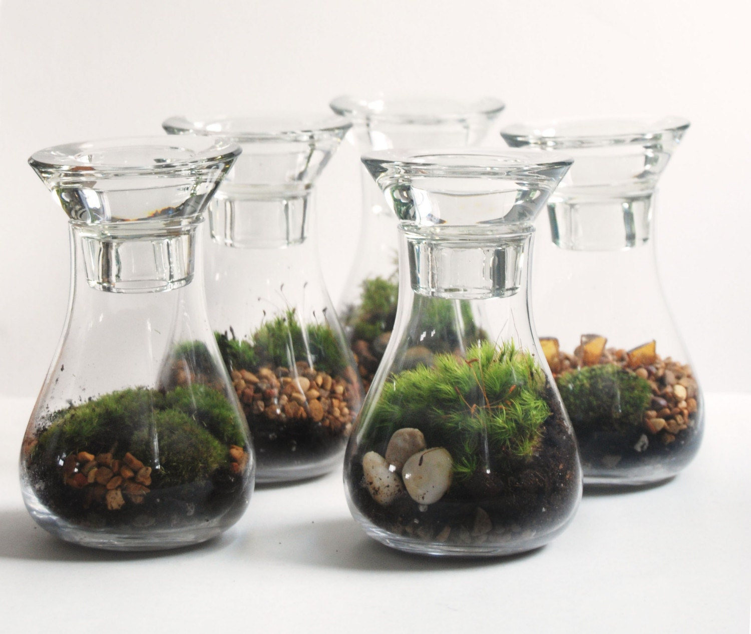 Live Moss Weddings Terrarium Available By Custom Order and Available Southeast Michigan/Toledo Area Only