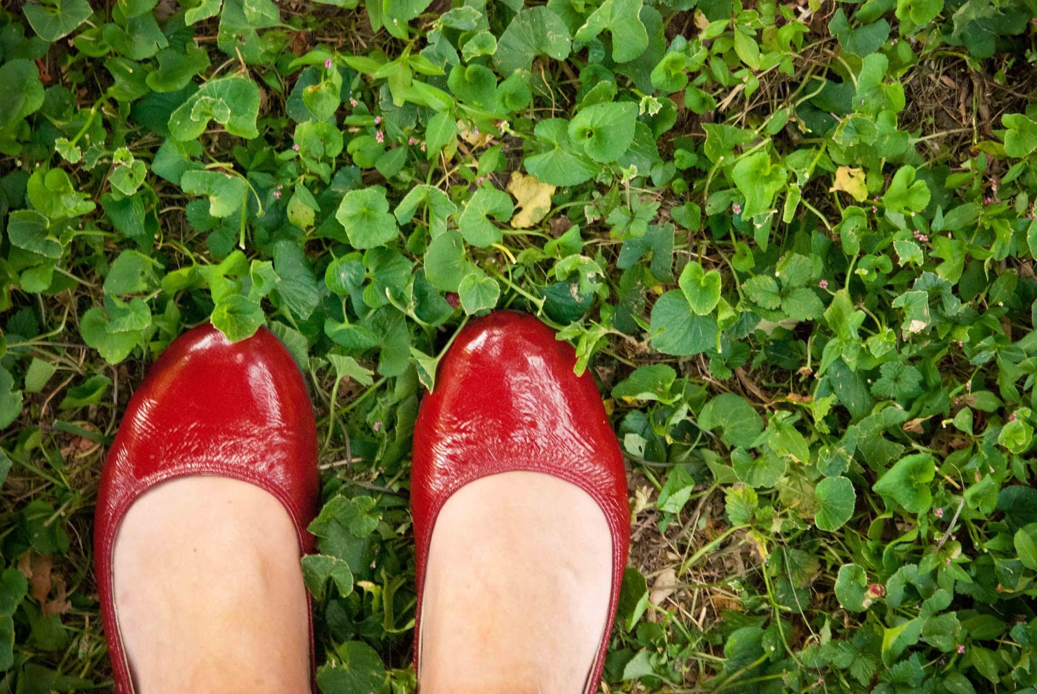 Little Red Shoes - 5 X 7 Photography Photo Art Print - Red Shoes Clover Grass Red Green Fashion