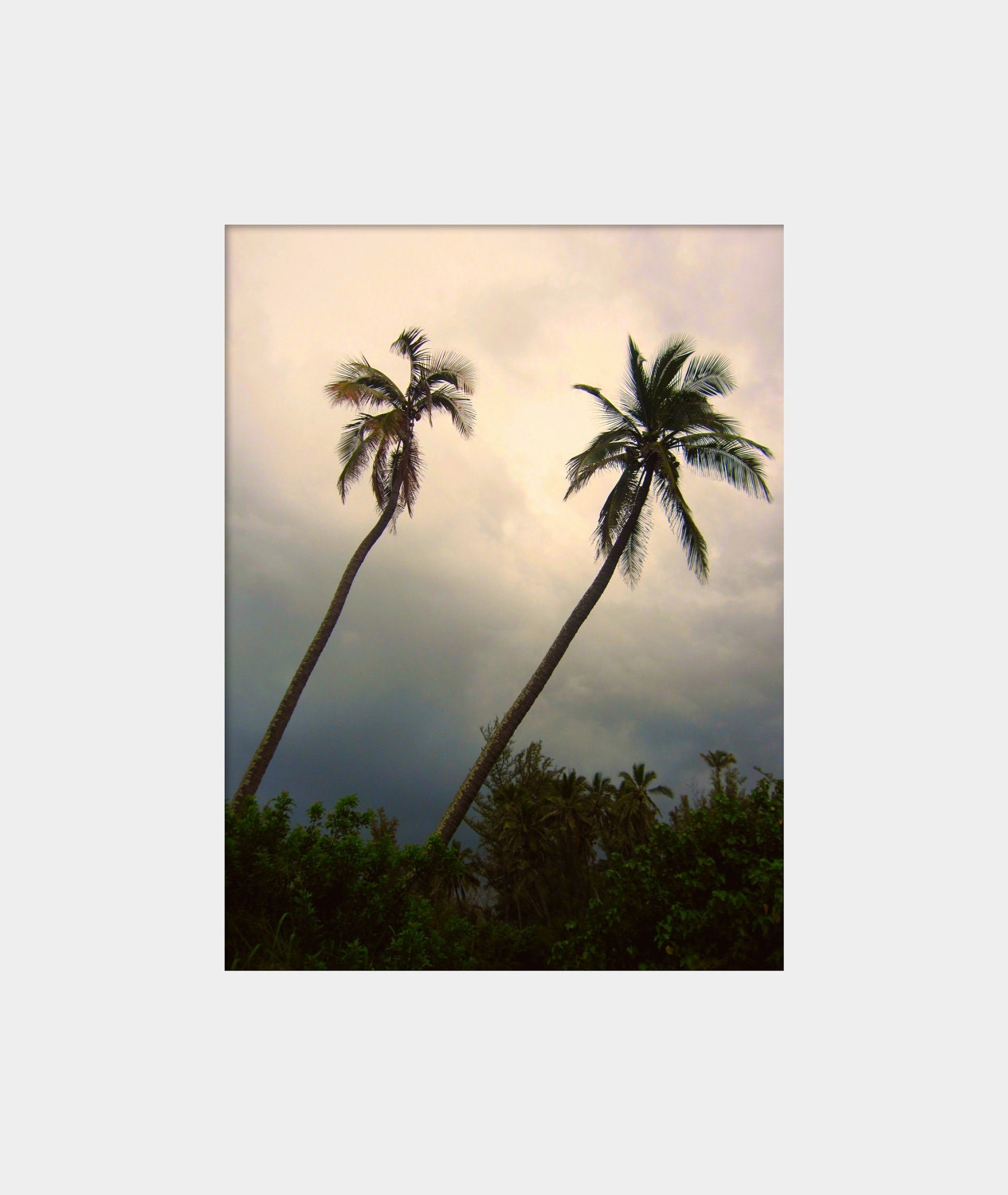 Parallel Palms: a fine art photograph print of two leaning palm trees on a stormy day in Hawaii - UninventedColors