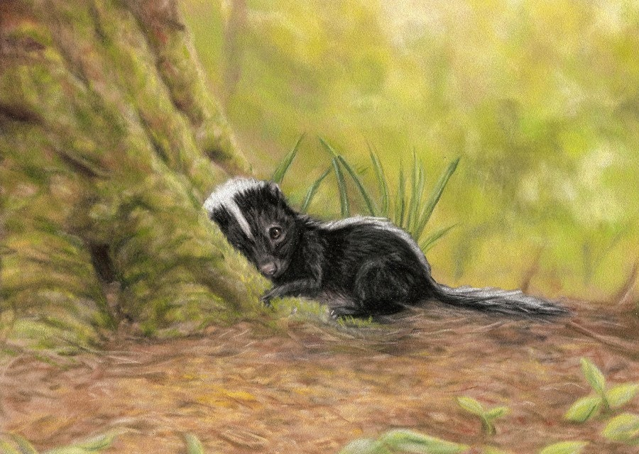 Little Skunk 5 x 7 Print