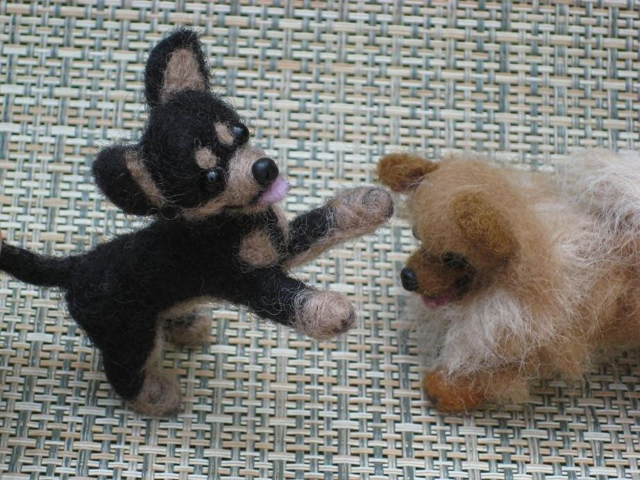 Toy Fox Terrier Mix
