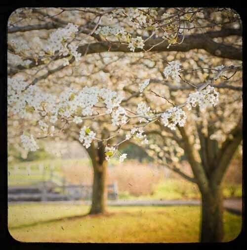 И вот однажды, весной появились (5x5 изобразительного искусства фотографии)