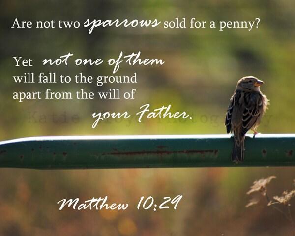 Scripture and a Snapshot - Matthew 10:29 - 8x10 Fine Art Nature Photography Print - Christian Bible Verse Inspirational Home Decor Photo