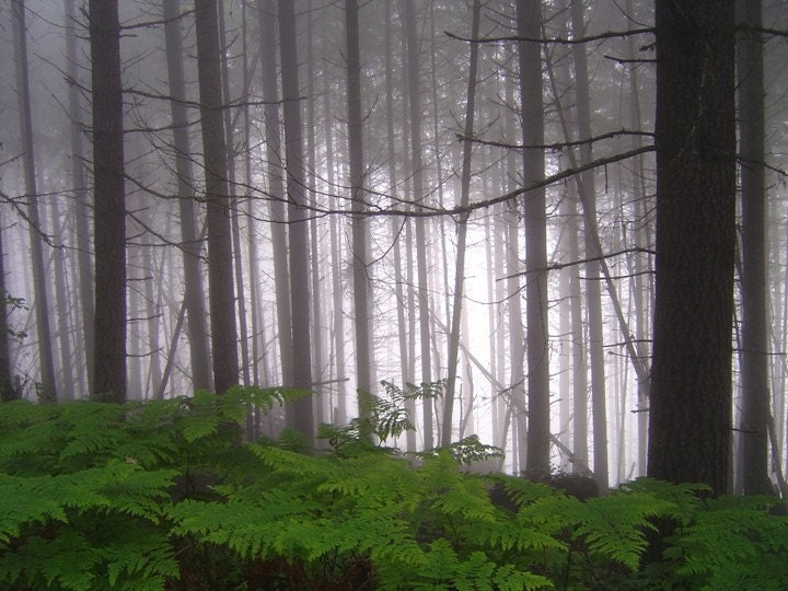 Foggy Forest - Blank Photo Greeting Card