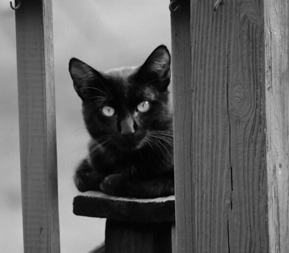 8x10 Fine Art Photography Black and White Print Black Cat Halloween Decor, Cat Decor, Wall Art - KArtisanStudios