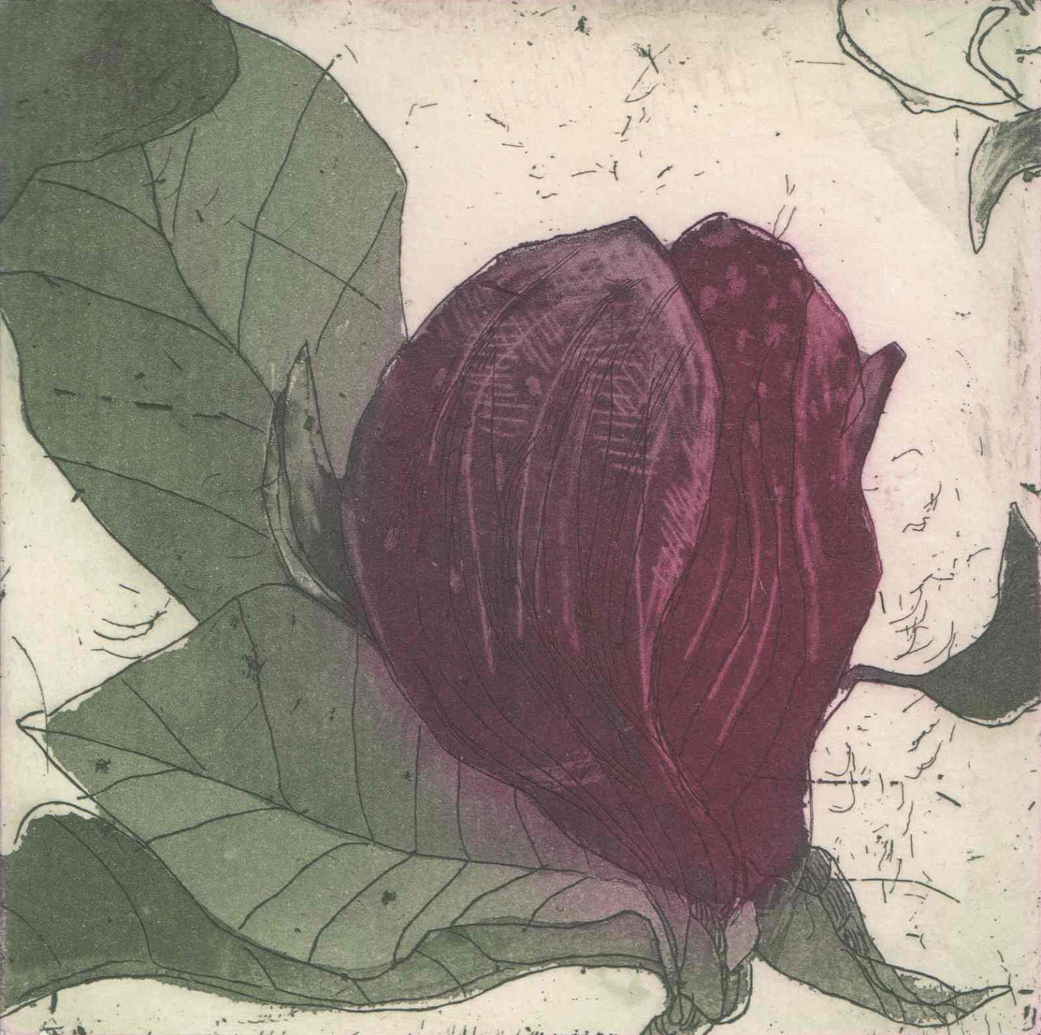 Purple Magnolia III, original hand pulled etching and aquatint by Marta Wakula-Mac