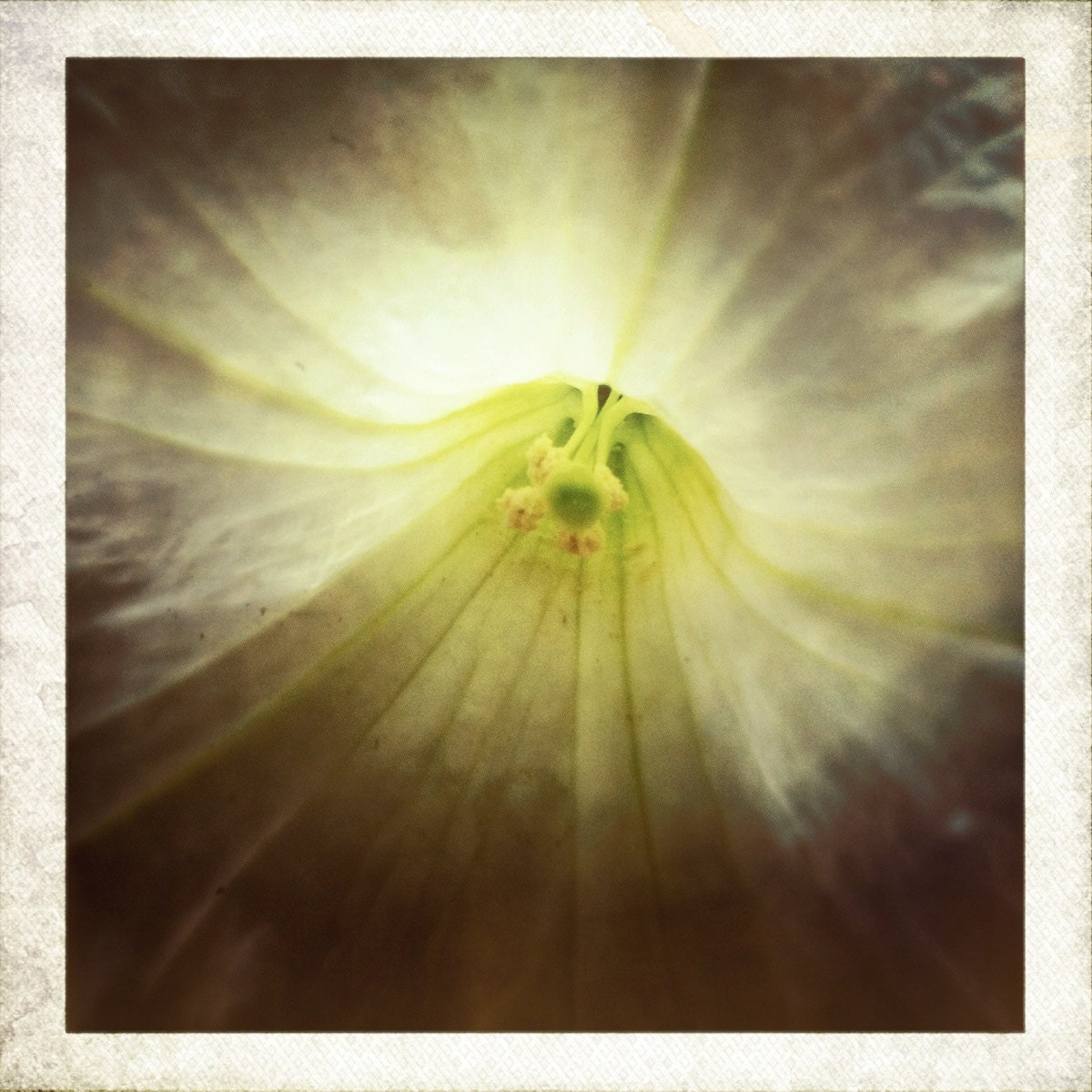 Petunia Love....Hipstamatic Original Photo
