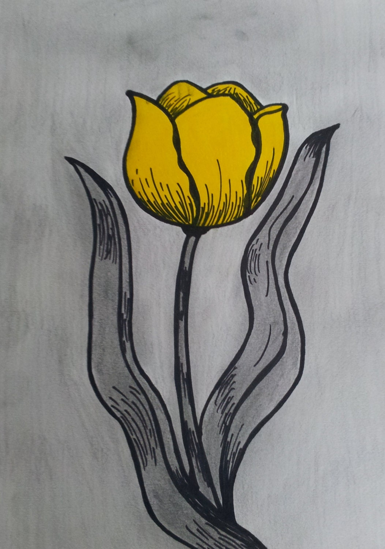 Grapite and Pencil Tulip Drawing - AthenasMarket