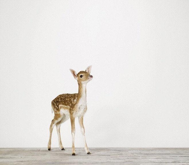 Baby Deer, 7 x 8 Fine Art Print