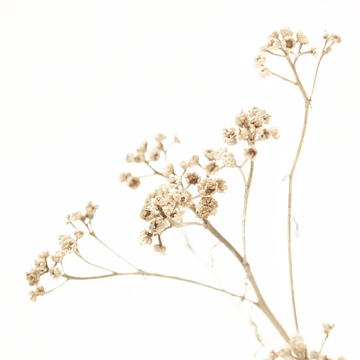 Winter white, tan, brown, wild flowers, white wedding, neutral, snow, white, beige, modern decor, cottage, cabin, straw, simplicity, nature - bomobob