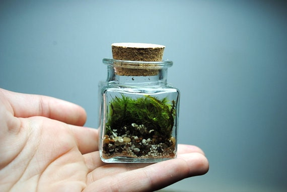 The sweetest little terrarium you will ever see with live kentucky moss desk object