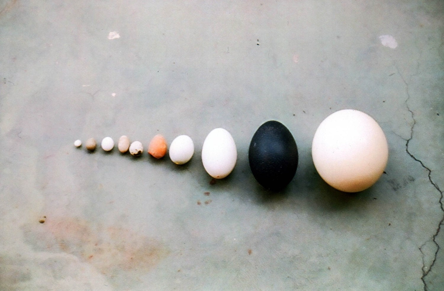 Egg Collection 5x7