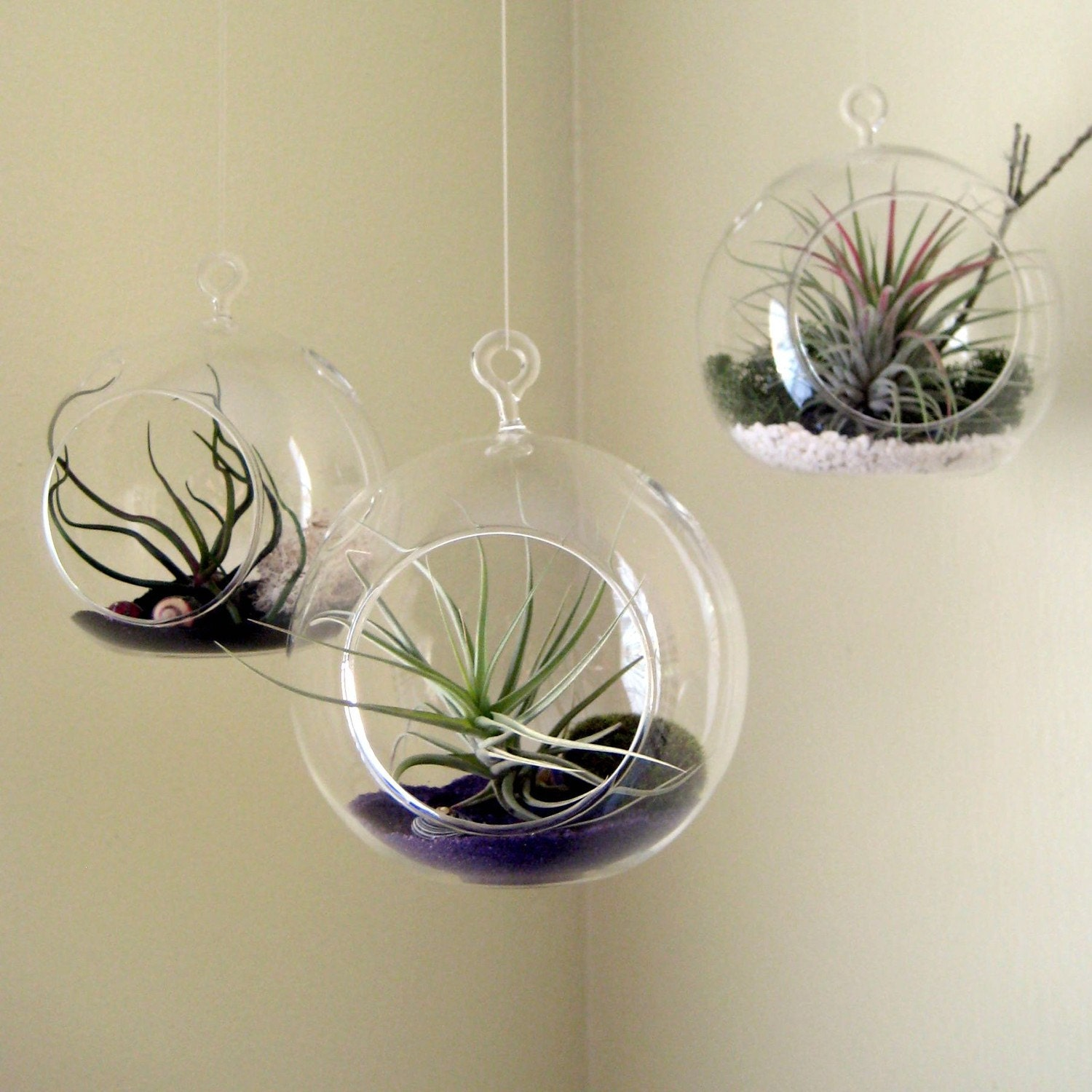 Set  of Three Air Plant Globes