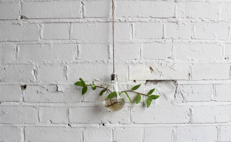 Hanging Lightbulb Terrarium Plant Holder with Hand Braided String