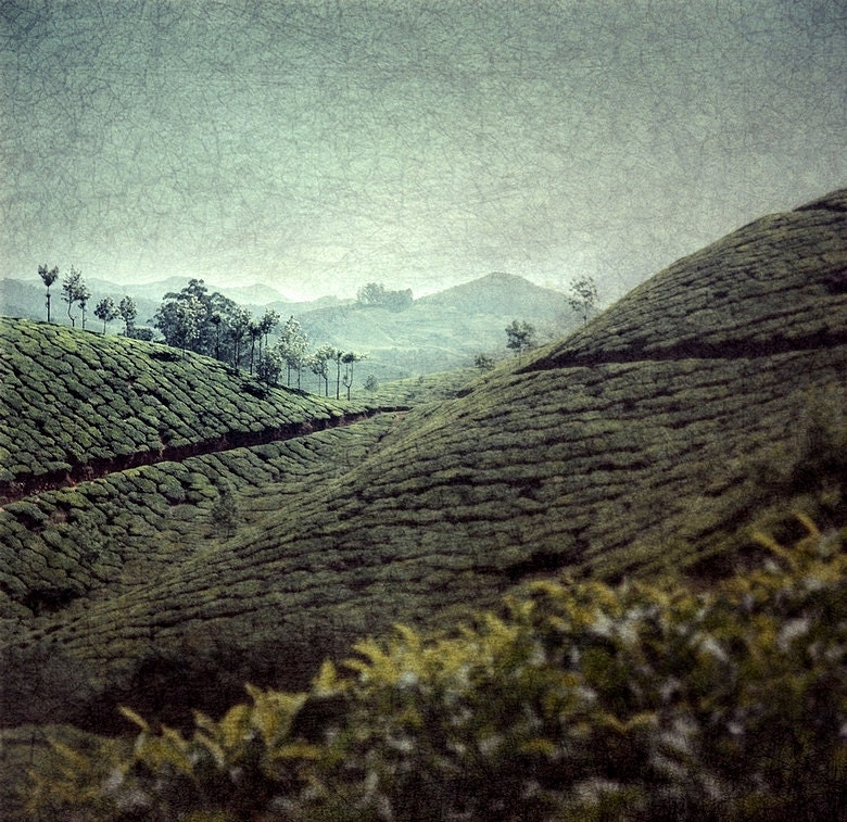 Munar spice hills tea plantation India hills mountains trees leaf mist blue green turquoise teal fine art photographic print wall art - NiceLittlePhotos