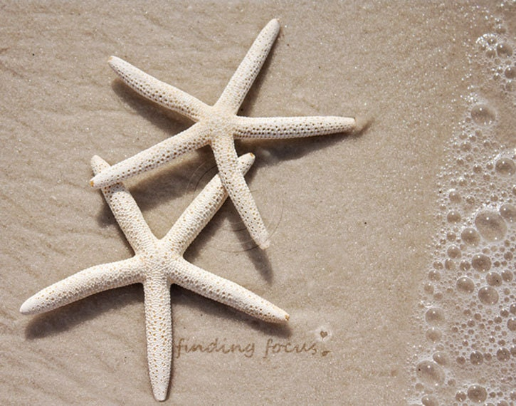 Two Starfish Beach Photography - Coastal Cottage Neutral Minimalist Decor Beachy Sand Foam Surf 2 Cream Star Fish, Pair, 11x14 Seaside Photo