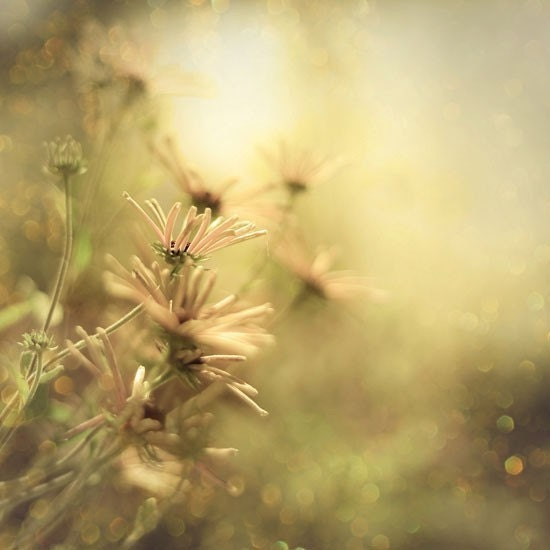 Sunlit  Summer Dreams - ethereal flowers surrounded by dancing bokeh and warm sunlight - A magical photograph - a Fine Art Nature Print (8x8)