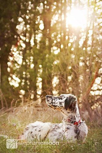 Dog Photography, 8x12 Fine Art Dog Photography Print - stephaniemoon