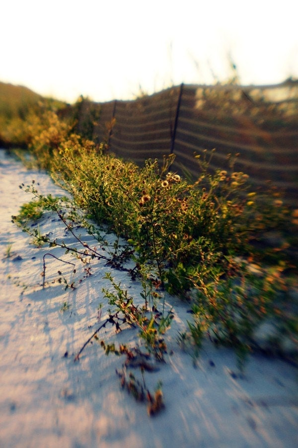 4x6 Beach Grass - Fine Art Photograph