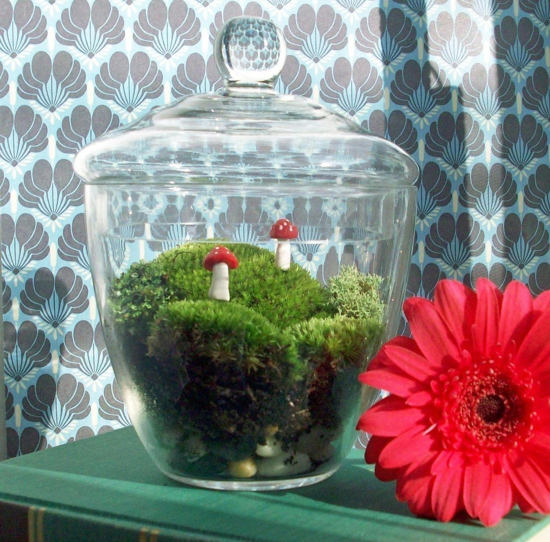 Apothecary Jar Moss Terrarium No. 21