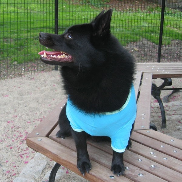 Top Dog - Dog T Shirt
