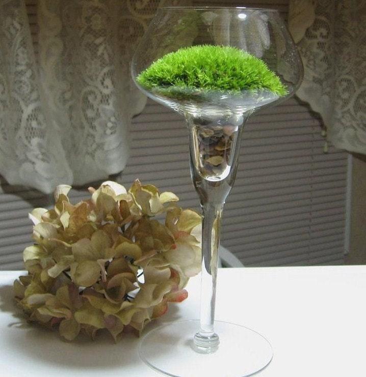 Moss Terrarium   An Elegant gift from Nature