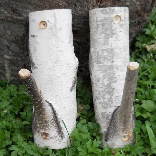 Birch Branch Pair of Rustic Hooks  Woodland Natural Decor