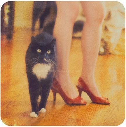 cat in high heels. woman with red high heels