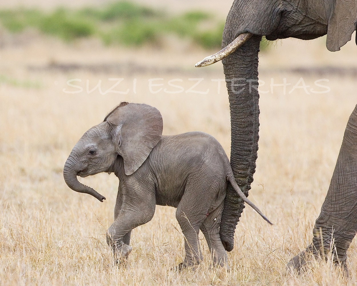50 Off Sale Baby Elephant Photo Print African By Wildbabies