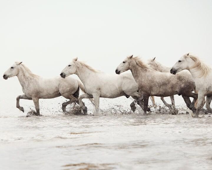 Лошадь фотографии - Морские коньки - Природа Фотография, Дикие лошади в океане - Animal фотографии