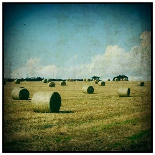 Harvest III - Signed Fine Art Photograph