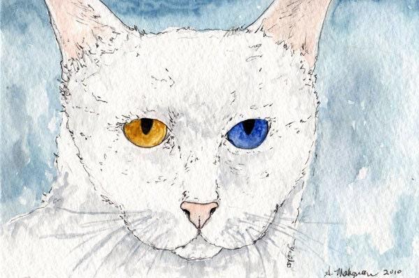 The Stare Feline Faces II