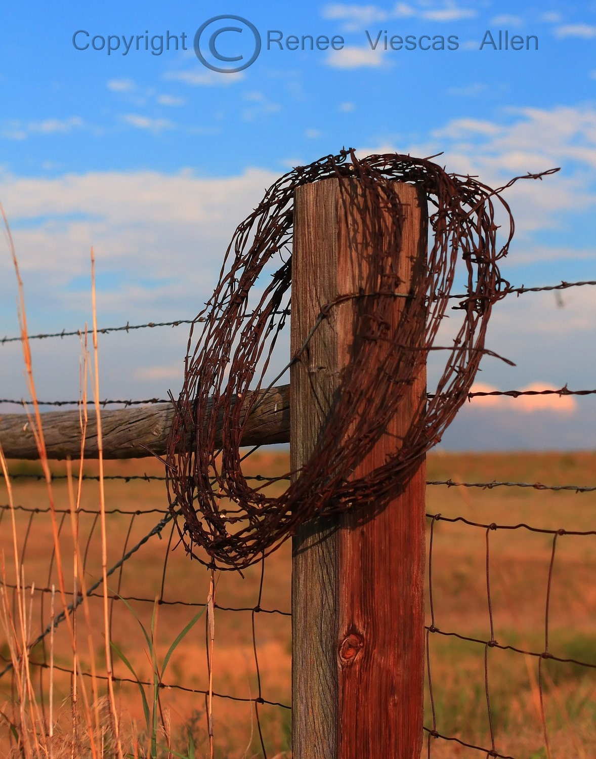 Barbed Wire, 8 x 10 Photograph