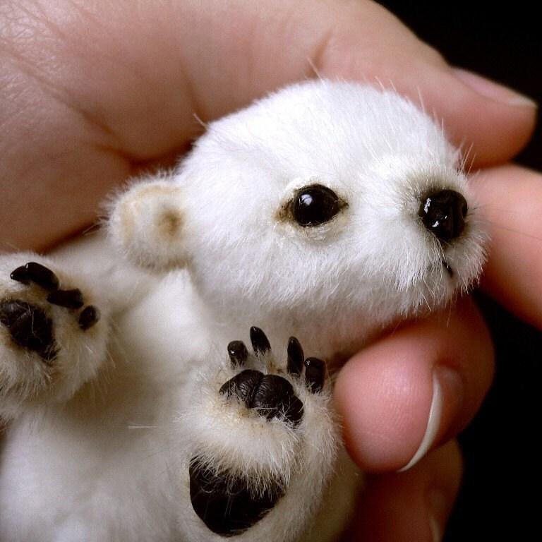 Miniature bear PATTERN Flocke / by Tatiana Scalozub / Bestseller